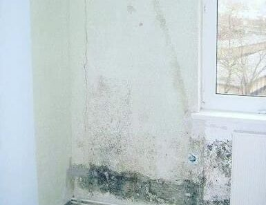types of mold picture