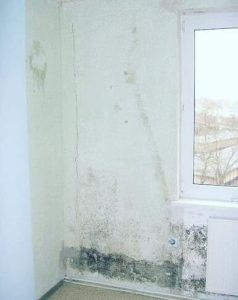 different types of mold in homes
